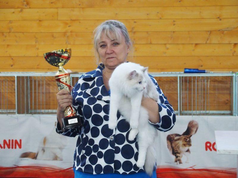 ELWIRKA Jennifer World*PL BOB – BEST of the BEST najpiękniejszy kot całej wystawy Żylina!!!528_n-800x600