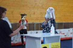 ELWIRKA Jennifer World*PL BOB – BEST of the BEST najpiękniejszy kot całej wystawy Żylina!!!