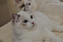 CANSU  Jennifer World*PL