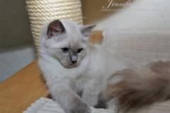 EMANUEL  Jennifer World*PL