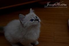 FRANCESCA Jennifer World*PL