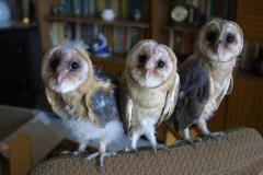 Fundacja ratujmy ptaki