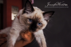 IC BESSI Jennifer World*PL