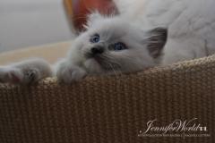 JASMINE Jennifer World*PL