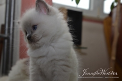 JEANETTE  Jennifer World*PL