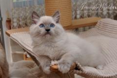 JESSICA Jennifer World*PL