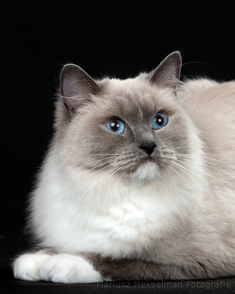 Blue mitted RAG a 04
