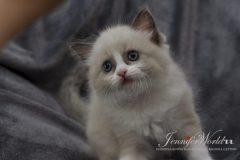 PL*Jennifer World JNIS