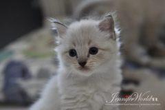 PL*Jennifer World KIRI