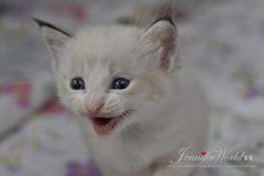 PL*Jennifer World MILES
