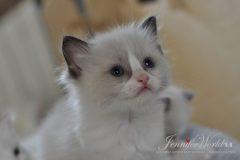 PL*Jennifer World ROGER-MOORE