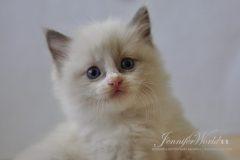PL*Jennifer World WILLIAM