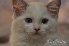 PL*Jennifer World XANTHIPPE