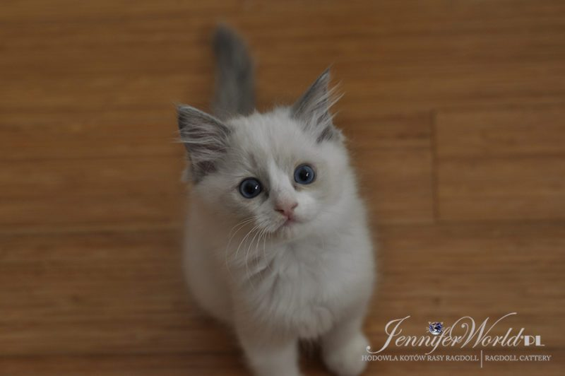 PL*Jennifer World YVETA