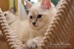 ROMULUS  Jennifer World*PL