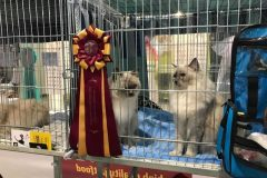 WORLD CAT SHOW 2019 Freiburg