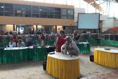 Międzynarodowa Wystawa Kotów Rasowych Sopot 2019
