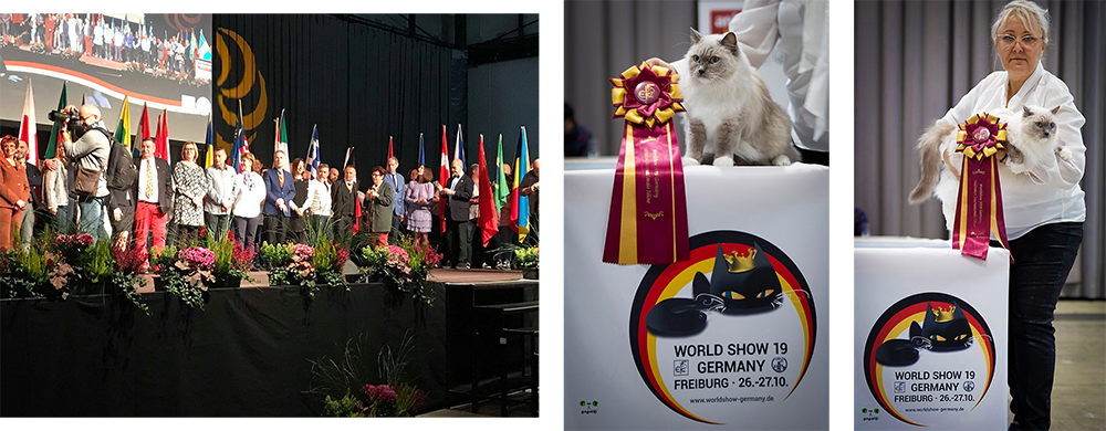 FIFe WWS WORLD CAT SHOW 2019 Freiburg