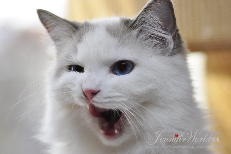PL*Jennifer World VIOLA