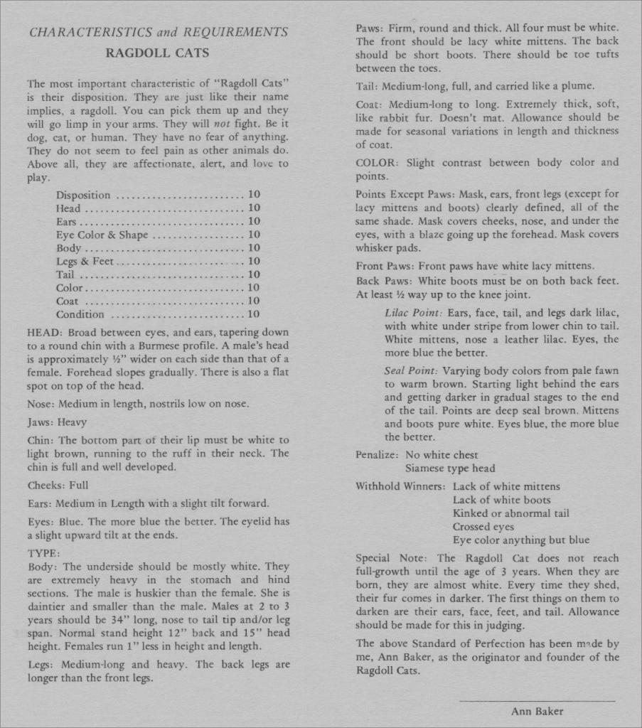 Standard rasy ragdoll Ann Baker