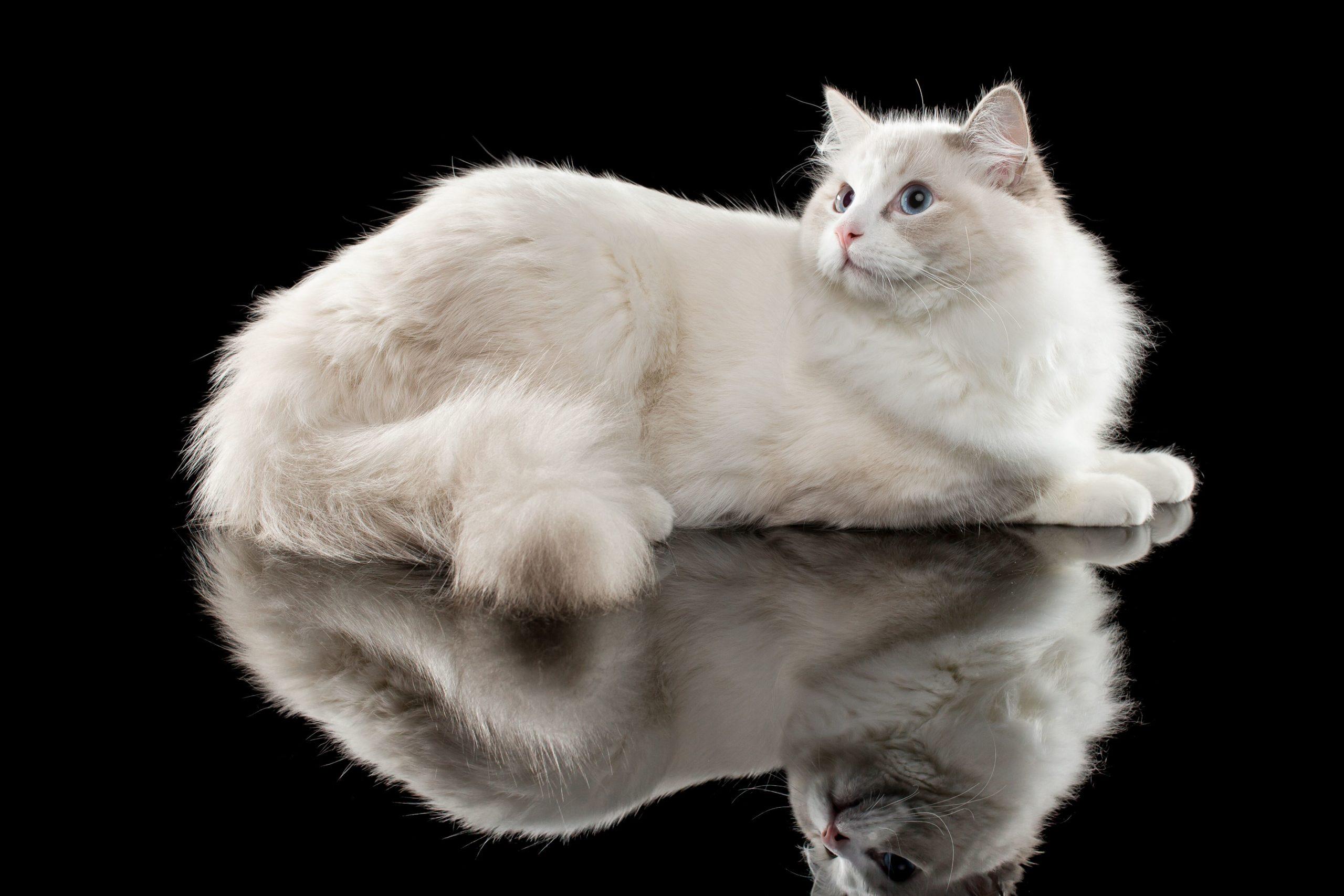 Człowiek jest cywilizowany na tyle, na ile potrafi zrozumieć kota.