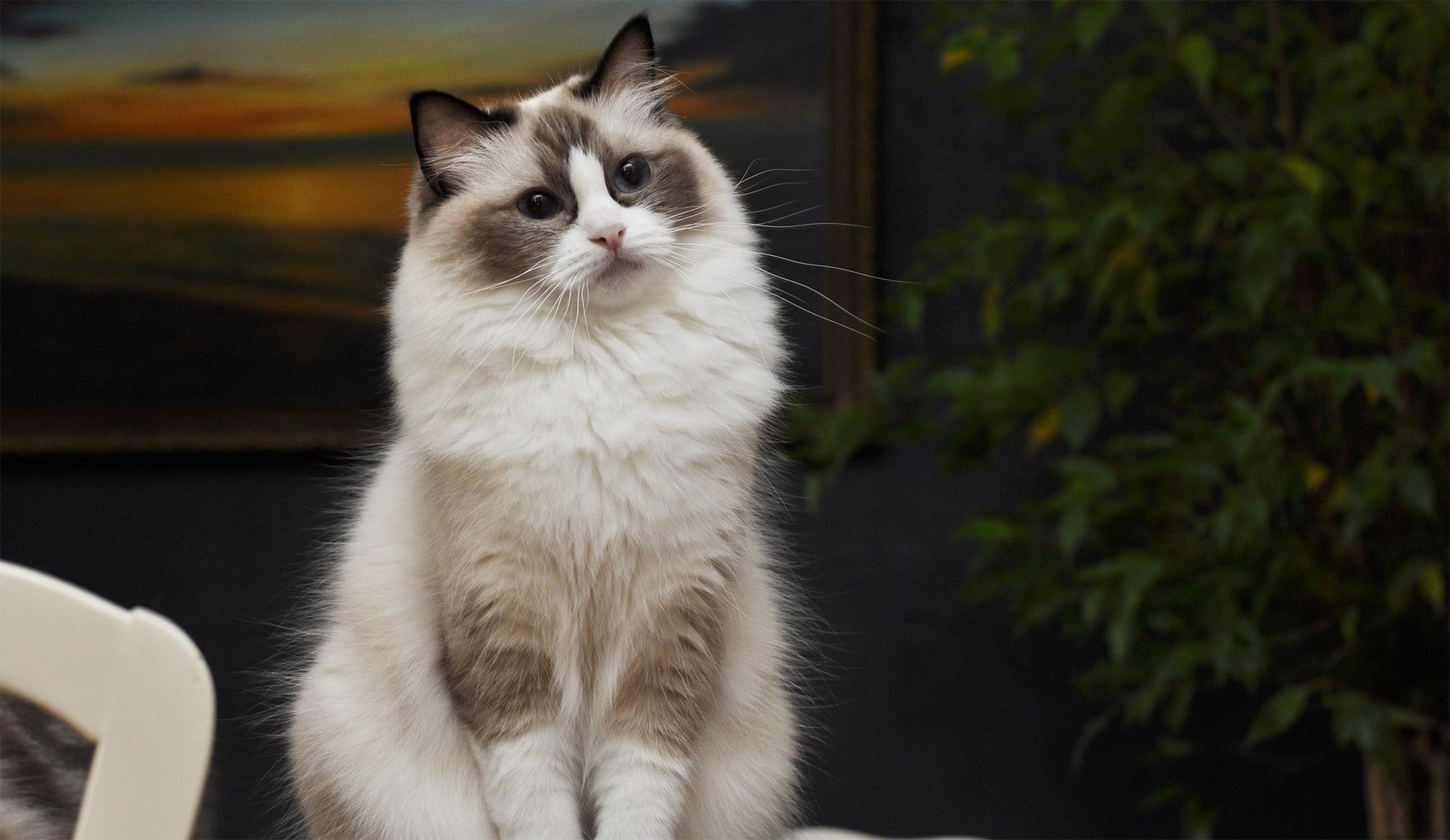 """""""Zdobyć przyjaźń kota nie jest rzeczą łatwą. Nie lokuje on swych uczuć nierozważnie: może zostać Waszym przyjacielem, jeśli jesteście tego godni, ale nigdy waszym niewolnikiem"""""""